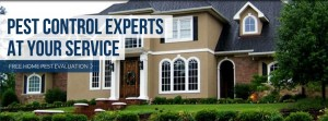 pest control experts at your service with free home pest evaluation
