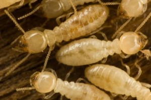 closeup of termites