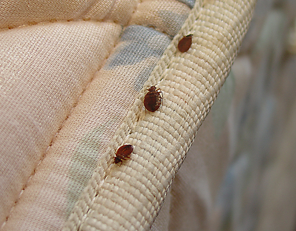 Syracuse Bed Bug Inspection