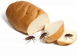 cockroaches eating loaf of bread