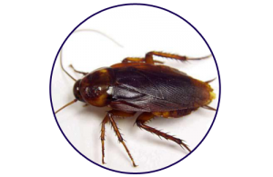 closeup of cockroach